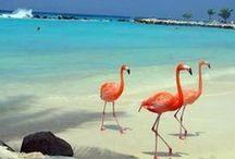 Holbox Beach Mexico / Conoce uno de los más hermosos destinos del caribe. CostaRealty - Más que una Inmobiliaria. web: www.costarealty.com.mx