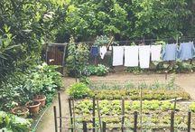 To Garden / I garden for my soul.