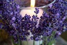Lavender/Lawenda / Rustykalne wesele w kolorze i z aromatem lawendy