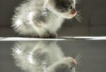 Gatos/Chats
