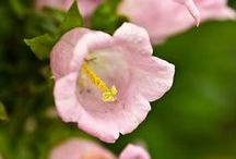 Flores / Fleurs