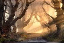 God's beauty / Nature / by Lisa Salazar