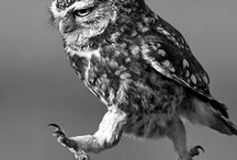 The owls are not what they seem