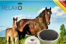 Grooming - Top Horse Outlet / Find great tools to groom your horse and make them into a beauty!