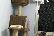 Meus gatos / Thor é um persa blue smoke, Freya eh uma persa creme,Safira eh uma calica arlequina e a Khloe eh uma tabby brown. São meus amores.