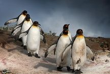Amazing animals and nature