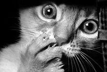 Cats, duh