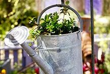 Gardening & Homegrown Ideas / Favorite tips and tricks for the homegrown garden and more