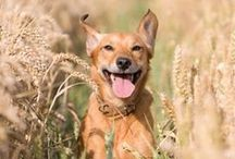 Pet Pins / Pet Photos, Supplies, Tips and Care -- all things pet from Tractor Supply Company!