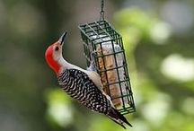 Backyard Birds / The know-how and products you need for attracting, feeding and caring for wild birds, as well as solutions to backyard bird problems, from Tractor Supply.