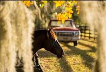 Horse Love / Tack, grooming, health, nutrition, tips, and beautiful photos for horse lovers. / by Tractor Supply Co
