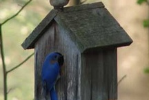 Bird Houses and Feeders / by Linda Brown