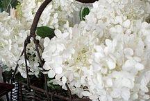 | Flowers & Gardens |