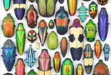 Bugs / Bugs bugs bugs