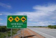 Australian Wildlife / A collection of photos taken on a visit to the Australian Wildlife.