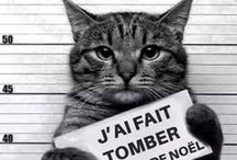 Funny Cats / Chats mignons