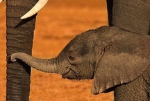 Why we love Africa... and other animals :)