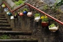 Gardening and the yard