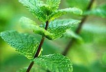 Medicinal Herbs / Plants / by Shabbir Bhutta