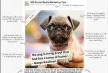 Pinterest infographics / Jam packed full of tips on how to improve your Pinterest account.