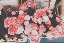 Precious Petals / Natural beauty / by marika elizabeth
