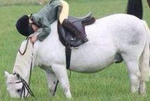 Hästar ridning