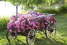 Gardenin'... For Flowers / ~ Tips and inspiration to beautify my yard ~ / by A Vintage Journey