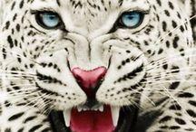 Gorgeous animals
