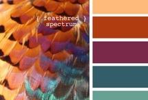 COLOR: color boards & inspiration