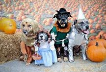 Dogs in costumes / It is what it is. / by Hassan Mirza
