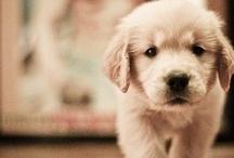 Pets | Mascotes