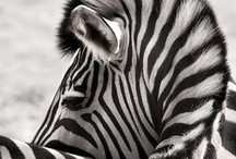 Black and White / by Bev Justice-Taylor