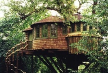 If I Lived in a Treehouse / by Bev Justice-Taylor
