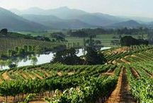 Favorite Napa/Sonoma Wineries / I love wine. I sell it for a living. Theses are some of my favorite wineries/vineyards in Napa Valley and Sonoma County that I have had the pleasure to visit and taste their wines! / by Bev Justice-Taylor