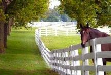 Horse Farms / by Bev Justice-Taylor