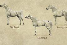 Arabian horses / by Paula G