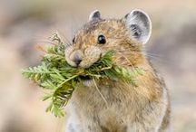 ANIMALS: woodland creatures / Woodland creatures are beautiful, adorable, and amazing. / by Karen Ziemkowski