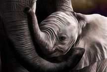 ANIMALS: adorable / Absolutely adorable animals. / by Karen Ziemkowski