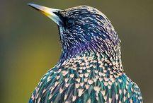 ANIMALS: bird love / by Karen Ziemkowski