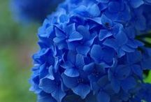 Blue things / NEED I SAY  IT'S MY FAVORITE COLOR ? / by Lucille P
