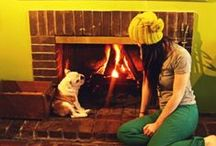 Fire-place / Cats and dogs in front of a warm fireplace and wood-briquettes.