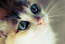 Gatti / Dolci, giocherelloni, affettuosi e indipendenti i gatti sanno fare molta compagnia pur senza richiedere troppe attenzioni o cure. Vivono bene in appartamento ma stanno volentieri all'aperto e a prescindere dalla razza, dal pelo e dal colore sapranno conquistare il vostro cuore!