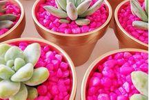 Pots flower planet