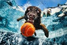 Animali Stravaganti / I nostri amici animali sanno essere davvero buffi: espressioni divertenti, a volte quasi umane, capriole, salti, nuotate! Ecco una bacheca dove trovarli nei loro ritratti più stravaganti e adorabili!