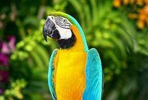 Birds / Colorati, eleganti, unici e splendidi: troverete qui uccelli di ogni razza, dimensione e colore!
