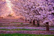 Natuur / Clingendael, april 2014