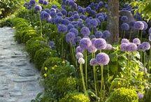 Architecture * Garden Design
