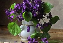The Color of Violet