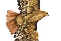 Arery´s art (Illustración científica) / Ilustraciones hechas por mi, de especies conocidas, respetando las características originales que definen a cada especie