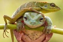 Animales y Naturaleza / Las maravillas de la naturaleza~!